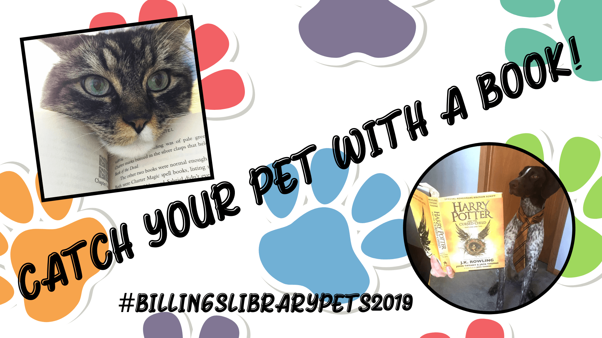 Catch your Pet with a Book!